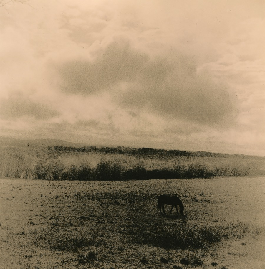 Zuili Horse In The Field © Guillaume Zuili