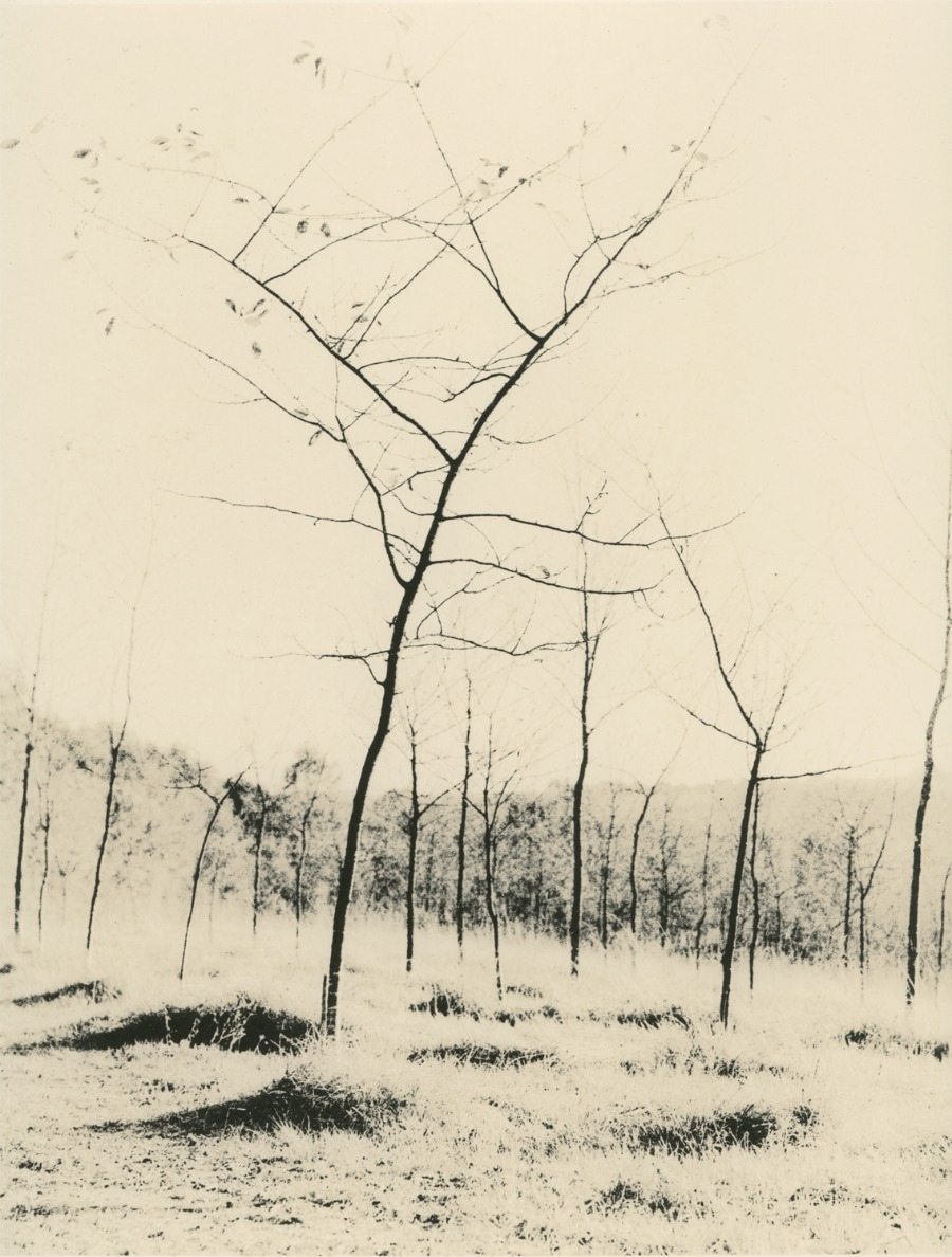 Zuili Young trees © Guillaume Zuili