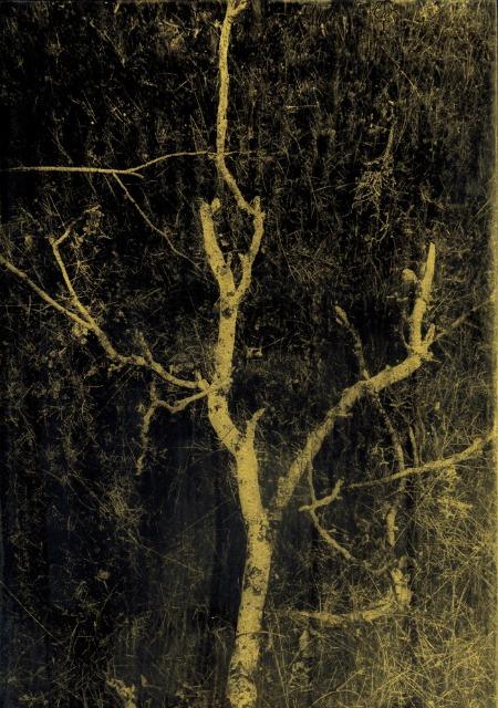 Noche Oscura © Anais Boudot
